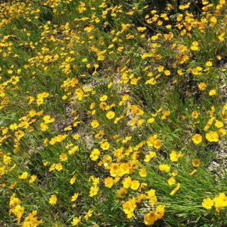 途中には綺麗な花が