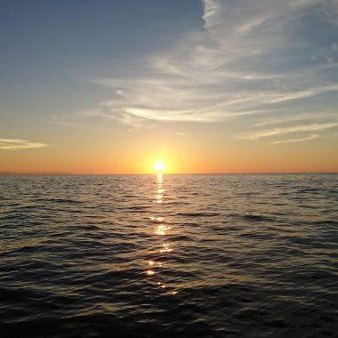 海には不思議な生物がいます