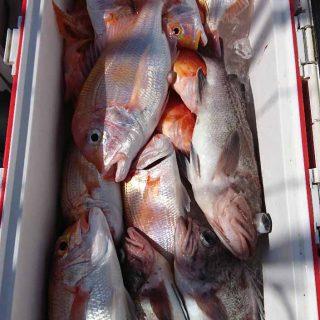 50リットルクーラー満タン近くの大満足の釣果