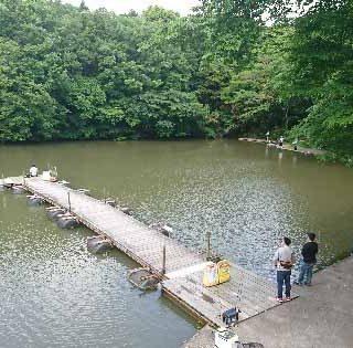 サンクチュアリ1号池
