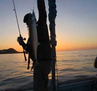 50センチぐらいのサゴシ(サワラの幼魚)