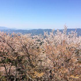 桜がキレイと評判の『吉野山』へ登ってきました