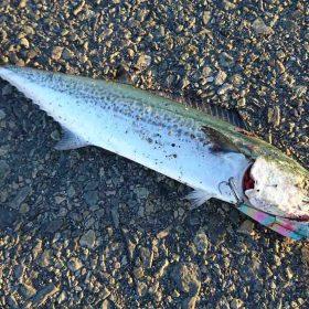 神戸近郊で釣りを楽しもう