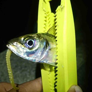 アジという魚について