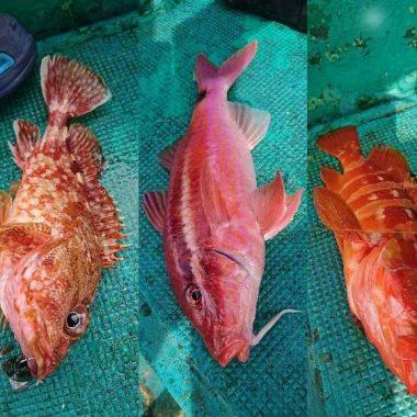 多魚種が狙えるスーパーライトジギング
