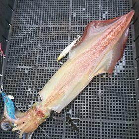 鳥取でイカ釣りをしてきました