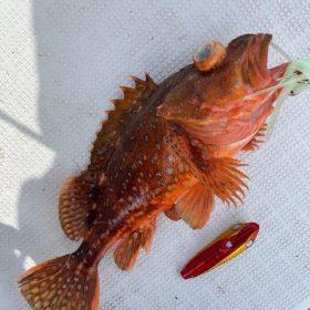 鳥取沖で根魚熱々